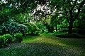 150510 183146 Giardino di Ninfa.jpg