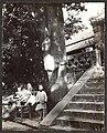 1907年9月10日岱庙内一颗有几百年历史的野生柿子树.jpg