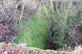 20061225-schleusentreppe-niederfinow-034.JPG