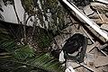 2010년 중앙119구조단 아이티 지진 국제출동100119 몬타나호텔 수색활동 (407).jpg