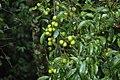 2014 Borneo Luyten-De-Hauwere-Flower-03.jpg