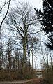 2017-02-12 ND68 Rotbuchen Essen-Bredeney.jpg