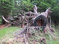 2017-07-15 (148) Unidentified tree in Zedlacher Paradies.jpg