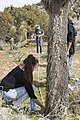 2017 Student Summit on Climate Change - Joshua tree Monitoring Project - Students measure the height of a Joshua tree (33452941266).jpg