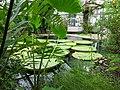 2018-06-18-bonn-meckenheimer-allee-169-botanischer-garten-victoriahaus-04.jpg