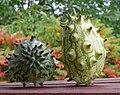 2 Kjwano afrikan horn cucumbre yellow-green.jpg