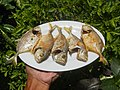 3412Fried fish in the Philippines 20.jpg