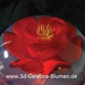 3d-Gelatine-Blume Freesie 1.png