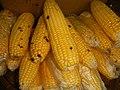 4690Common houseflies and delicacies Bulacan foods 26.jpg