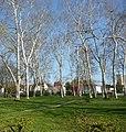 67122 Altrip, Germany - panoramio - Immanuel Giel (2).jpg