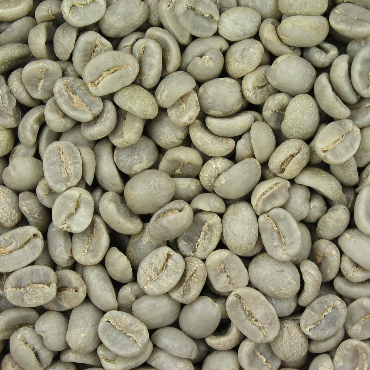 Grüne Kaffeebohnen zur Gewichtsreduktion Ecuador