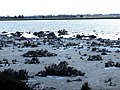 A@a salt lake near spyros beach behind international airport larnaca cy - panoramio (1).jpg
