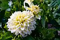 ADD SOME COLOUR TO YOUR LIFE (FLOWERS IN A PUBLIC PARK)-120118 (29273091645).jpg