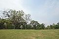 AJC Bose Indian Botanic Garden - Howrah 2018-04-01 2299.JPG