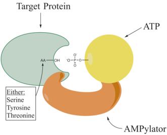 garrett and grisham biochemistry pdf free download