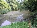 A Pond near Pendell Court - geograph.org.uk - 51131.jpg