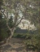 A Tree. Study (Anna Nordlander) - Nationalmuseum - 22305.tif