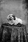 A pet dog (Roberts) NLW3363250.jpg