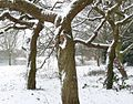 A snowy scene in Braunstone Park - geograph.org.uk - 1146975.jpg