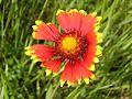 Ab plant 685.jpg