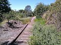 Abandoned Railroad overgrown - panoramio.jpg