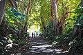 Adelaide (40000123361).jpg