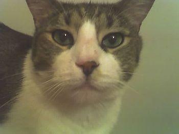 Admrboltz cat Floyd 2
