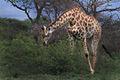 Africa Safari 015 (5295975245).jpg