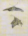 Aimitsu-1941-Moths.png
