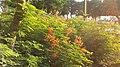 Alain UAE New 384 - panoramio.jpg