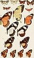 Allgemeine biologie (1915) (17919593068).jpg