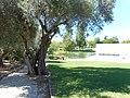 Almancil community gardens, 26 August 2015 (1).JPG