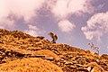 Amorgos.jpg