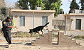 An Iraqi police officer with the major terrorism K-9 unit guides his dog over an obstacle during training at Contingency Operating Site Diamondback, in Mosul, Ninevah province, Iraq, May 23, 2011 110523-A-RH393-099.jpg