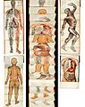 Anatomical charts of channel acupoints for the new acupuncture.JPG