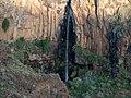 Ancón de los Cardones en el Barranco de Iguala. - panoramio.jpg