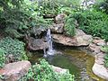 Anderson Japanese Gardens - View of Pool.jpg