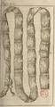 Andry - De la génération des vers (1741), planche p. 202.png