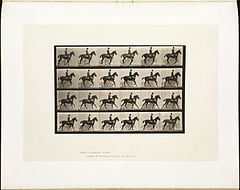 Animal locomotion. Plate 616 (Boston Public Library).jpg