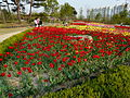 Ansan Lake Park Spring 2015 20.JPG
