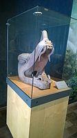 Antropología - Museo Nacional de Antropología ovedc wikimania 043.jpg