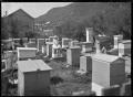 Apiary at Mangapehi, 1920. ATLIB 288303.png