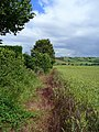 Arable edge - geograph.org.uk - 869384.jpg