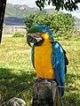 Arara em Parque Nacional da Chapada dos Veadeiros - Filipe Rebula Hasse Ferreira.jpg