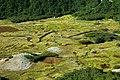 Argentina - Bariloche trekking 127 - twisting alpine wetlands (6798023559).jpg