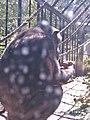 Artis, Zoo, Dierentuin - panoramio (110).jpg