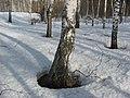 Asinovsky District, Tomsk Oblast, Russia - panoramio (243).jpg
