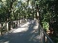 Atlanta Canopy walk 2.jpg
