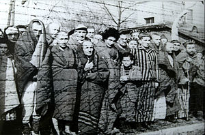 English: Photograph of prisoners at Auschwitz-...