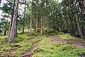 Austria trails in forest.jpg